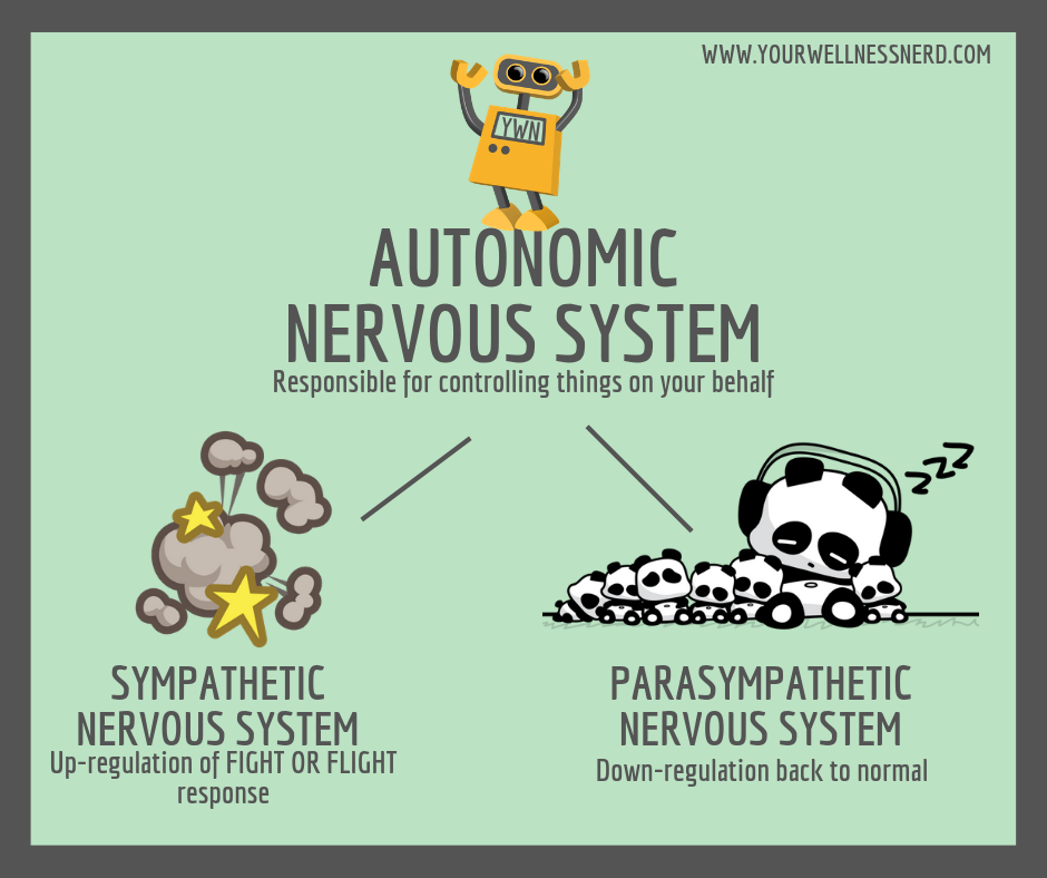 breaking Autonomic nervous system down to sympathetic and parasympathetic components